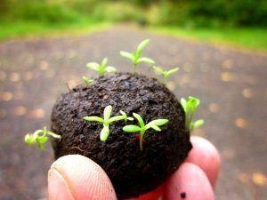 como hacer bombas de semillas