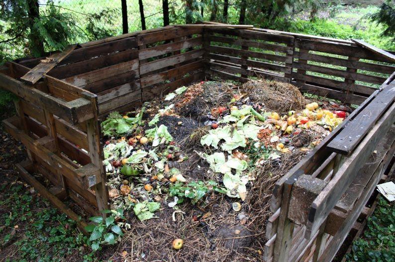 mitos y verdades desechos orgánicos para compostaje con lombrices