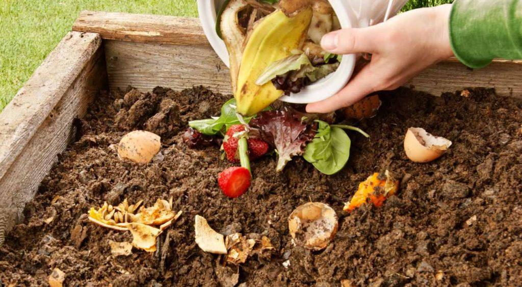 mitos y verdades cómo realizar compostaje con lombrices