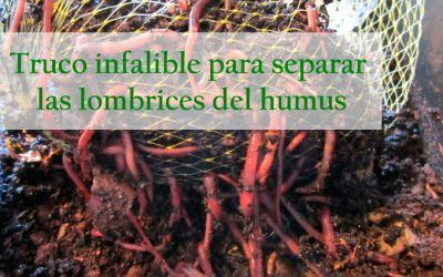 ¿Cómo separar las lombrices del humus en tu compostador?