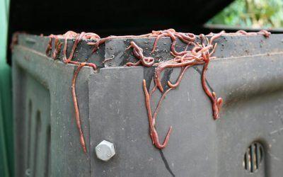 ¿Por qué huyen las lombrices de mi compostador? ✅ ¡Solucionado!