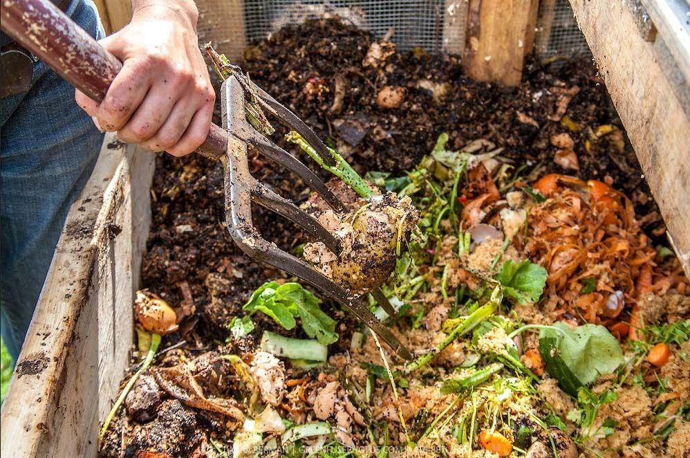 Ventajas y desventajas del pre-compostaje en la alimentación de las lombrices