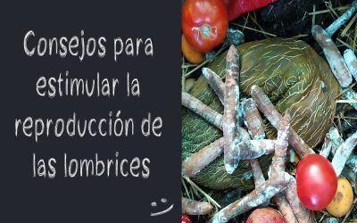 Consejos para estimular la reproducción de las lombrices