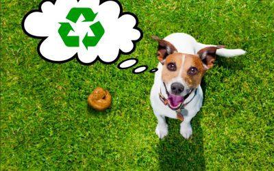 Convierte los excrementos de tu mascota en un super abono para plantas