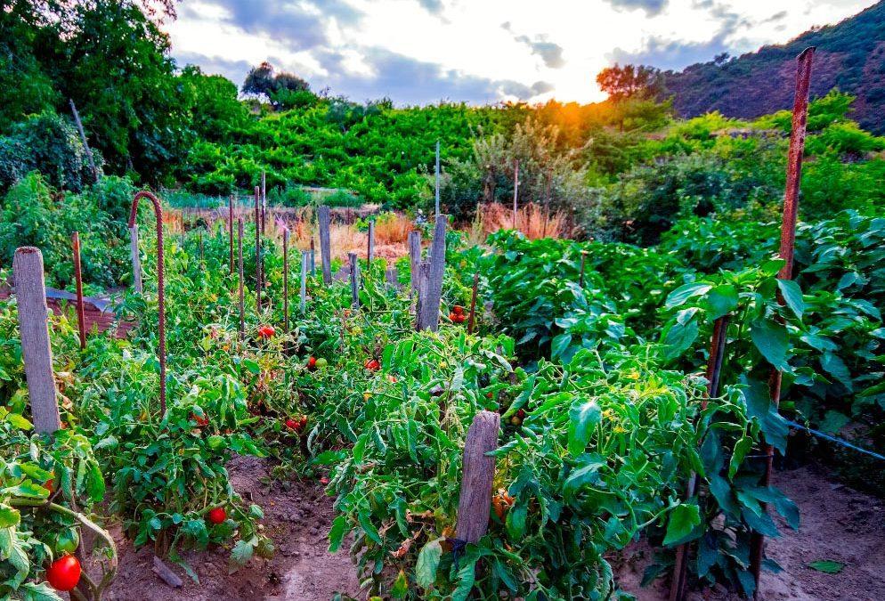 ¿Quieres un huerto de 10? – Trabaja la tierra en invierno